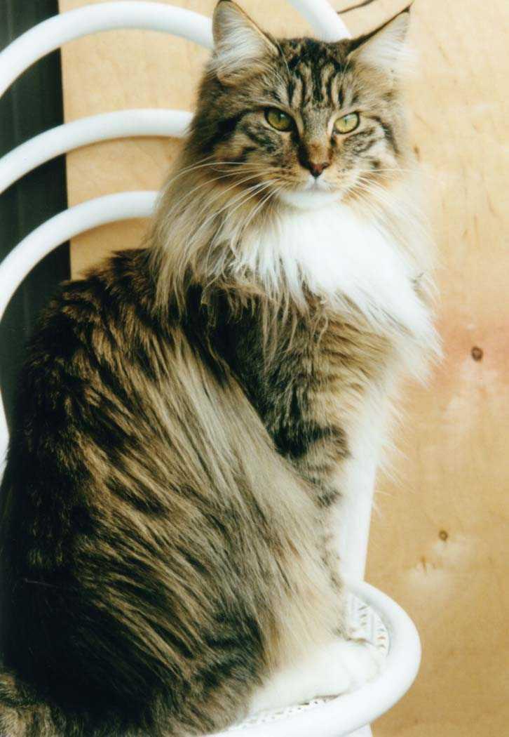 Lucy-Balkonstuhl-1.jpg